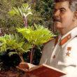 Месть «травы Сталина»: как борщевик захватил Россию
