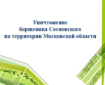 План «Уничтожение борщевика Сосновского на территории Московской области»