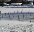Зимнее картографирование зарослей борщевика Сосновского